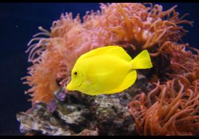 Yellow Fish by Phoeni-xx