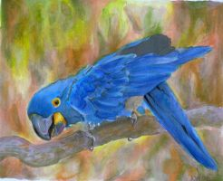 blue macaw by EatToast