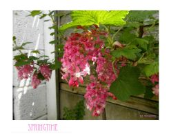 Springtime by Buble