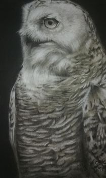 Another owl study by SiriuslyArt