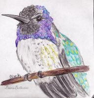 Hummningbird by BamaBelle2012