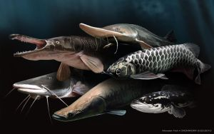 Monster Fishes by cromzl