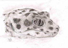 Smiling Leopard Gecko by Rednon
