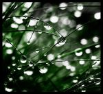 drops 2 by mikeb79