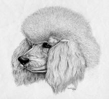 Poodle dog by FrozenPinky