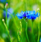 green and blue by indojo