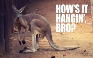 How's It Hangin', Bro? by nxxos