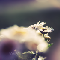 :fading love: by onixa