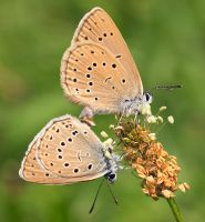 Mating by starykocur