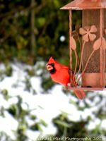 Red bird in the snow by Famous-Panda