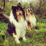 Country Collies by hermio