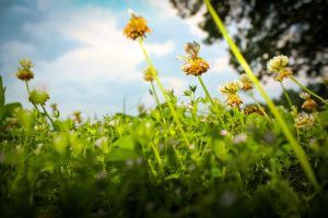 The Stormy Grass (Vivid Color) by SparkVillage