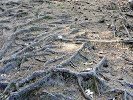 wood roots 2 by deepest-stock