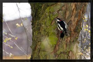 Woodpecker by deaconfrost78