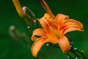 The Flower of Procreation by PLutonius