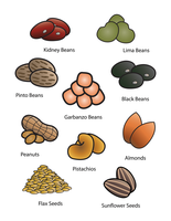 10 Beans Nuts and Seeds Cards by FightTheAssimilation