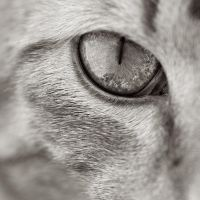 cat eye by knold