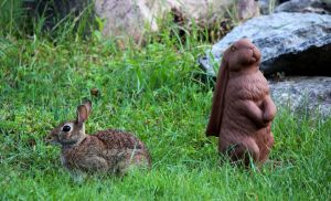 Rabbits by boogster11
