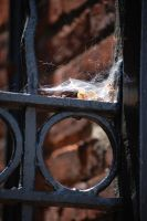 Ironwork by CAMeo-Artworks