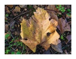 All the leaves are brown by Habanbo