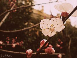 Back To Spring Again by stoxic