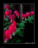 Bleeding Hearts by artangst