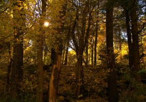 Forest In Yellow by draconis42