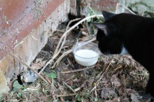 Cat sees hedgehogs and milk by DrawingTessa