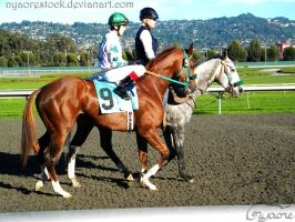 Golden Gate Fields - Racers 98 by Nyaorestock