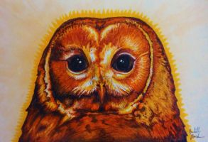 Staring Owl by Redwall151
