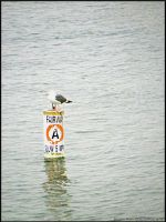 Lonely Seagull by jltrafton