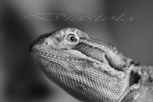 Bearded dragon by Diastola