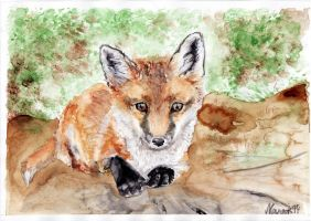 Fox cub lying by Nanook94