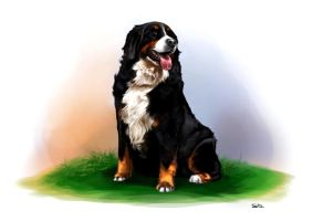 Bernese Mountain dog by sweetdrawingwind