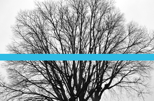 Just A Tree With A Blue Line by Dese-M