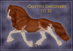 Cavitto Discovery 23 by sVa-BinaryStar