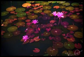 The Lotus Lake by nhoctiny