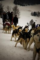 Mushing - before the race by milanko
