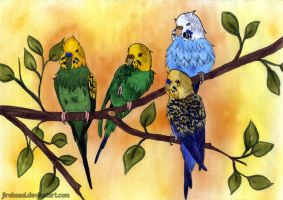 My beloved budgies by arkytaka