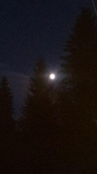 Moonlight between trees by Cassi4you