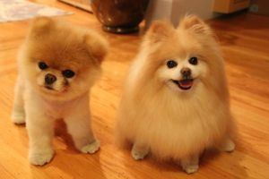 Two beautiful puppies by CllaudiiaElena