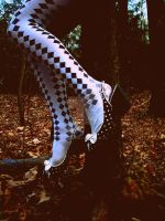 Checkered stockings and pumps by photogenicsmiles