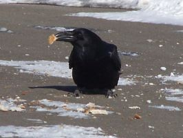 breakfast for Mr. Raven by Cainamoon