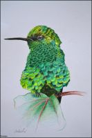 Emerald hummingbird by Verenique