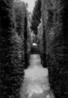 Running Through the Maze by Forestina-Fotos
