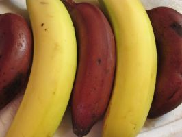 Red and Yellow Bananas by Windthin