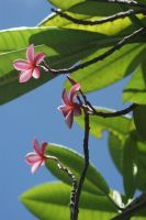 St Lucian Floral 1 by Spree5326