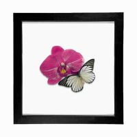 Real Butterfly Framed Display by TheButterflyBabe