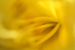 Yellow abstract background 2 by greyrowan
