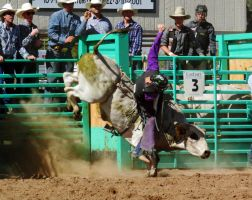 Bull Busting Stock 05 by Rejects-Stock